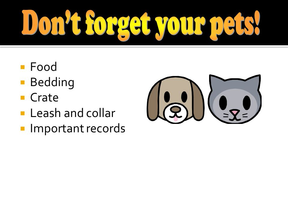Food Bedding Crate Leash and collar Important records