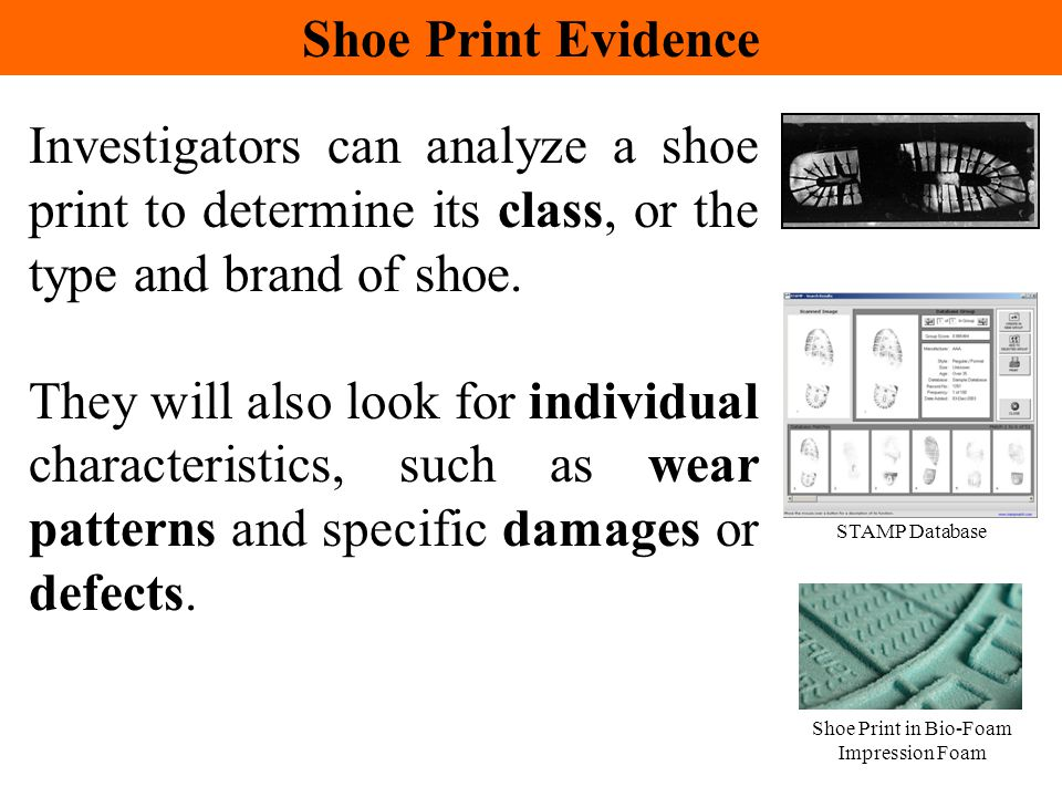 Investigators can analyze a shoe print to determine its class, or the type and brand of shoe. They will also look for individual characteristics, such