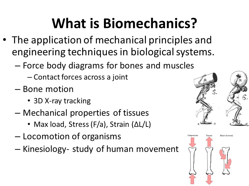 What is Biomechanics? The application of mechanical principles and engineering techniques in biological systems. – Force body diagrams for bones and m