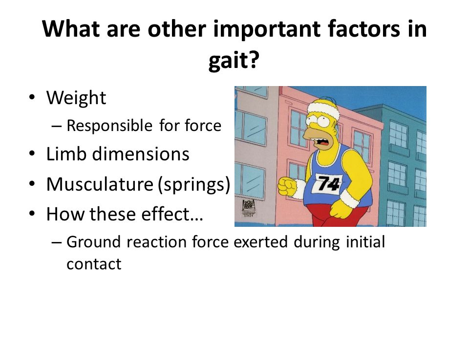 What are other important factors in gait? Weight – Responsible for force Limb dimensions Musculature (springs) How these effect… – Ground reaction for
