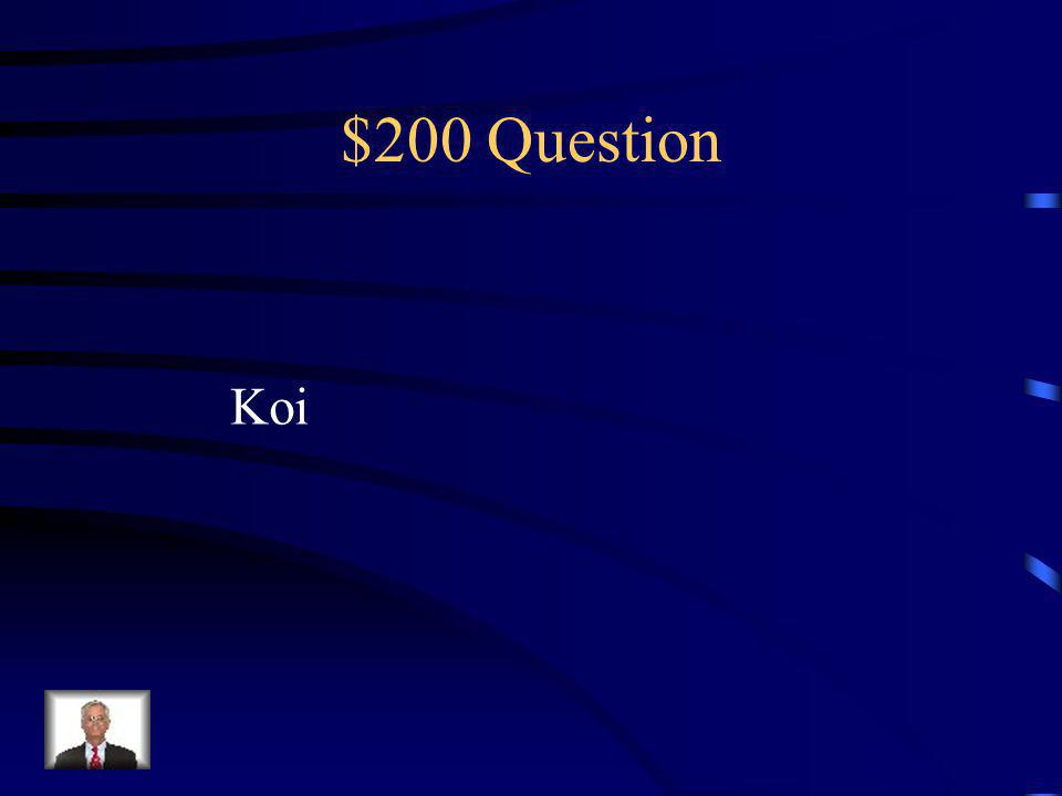 $100 Answer The ability to see reality. Being able to see what others cannot see
