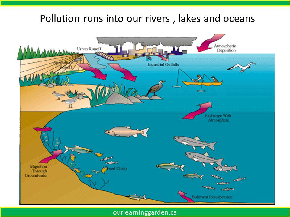 Yellow circle is pollution What is happening Is this biomagnification ourlearninggarden.ca