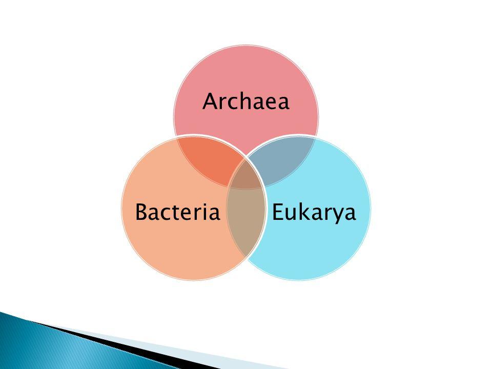 Archaea EukaryaBacteria