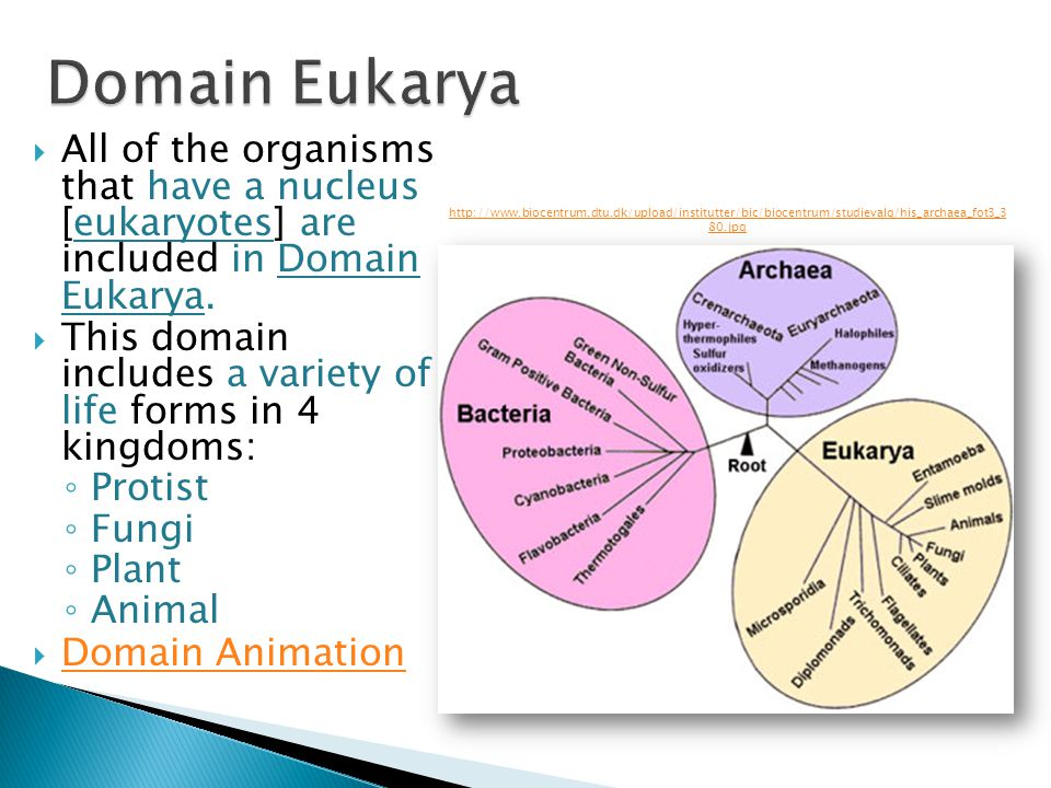 All of the organisms that have a nucleus [eukaryotes] are included in Domain Eukarya. This domain includes a variety of life forms in 4 kingdoms: Prot