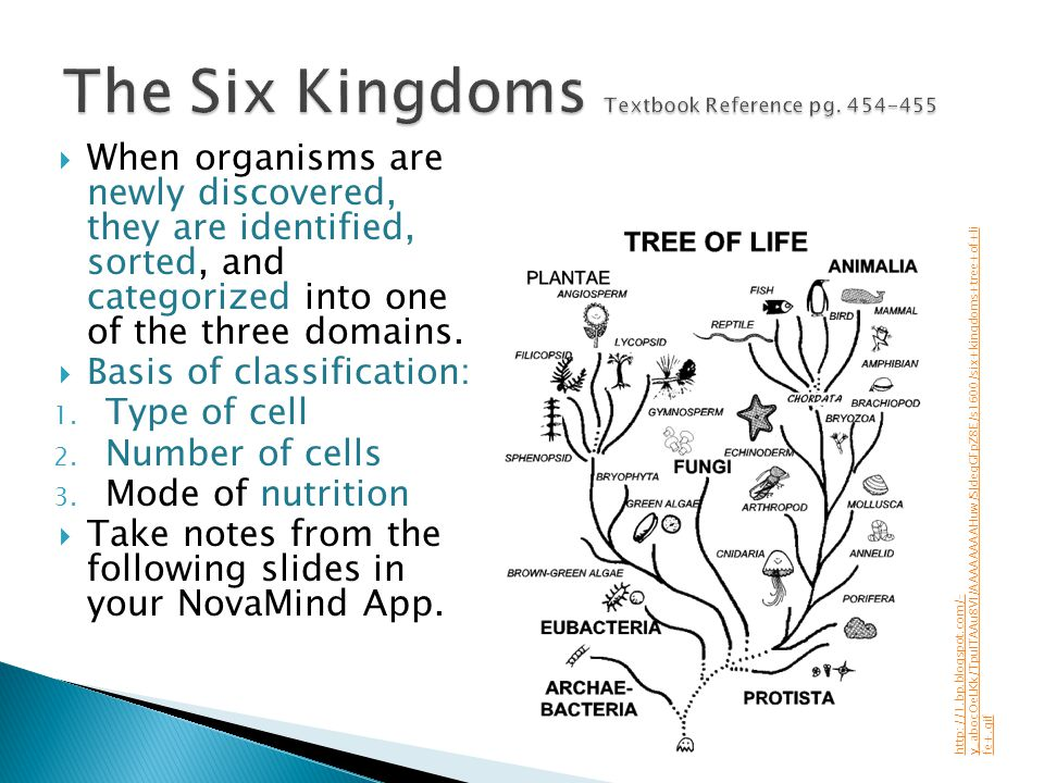 When organisms are newly discovered, they are identified, sorted, and categorized into one of the three domains. Basis of classification: 1. Type of c