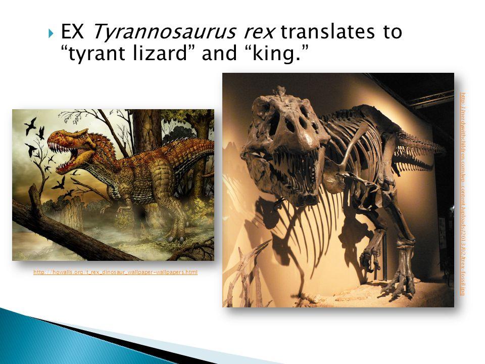 EX Tyrannosaurus rex translates to tyrant lizard and king. http://nerdywithchildren.com/wp-content/uploads/2013/02/trex-fossil.jpg http://hqwalls.org/