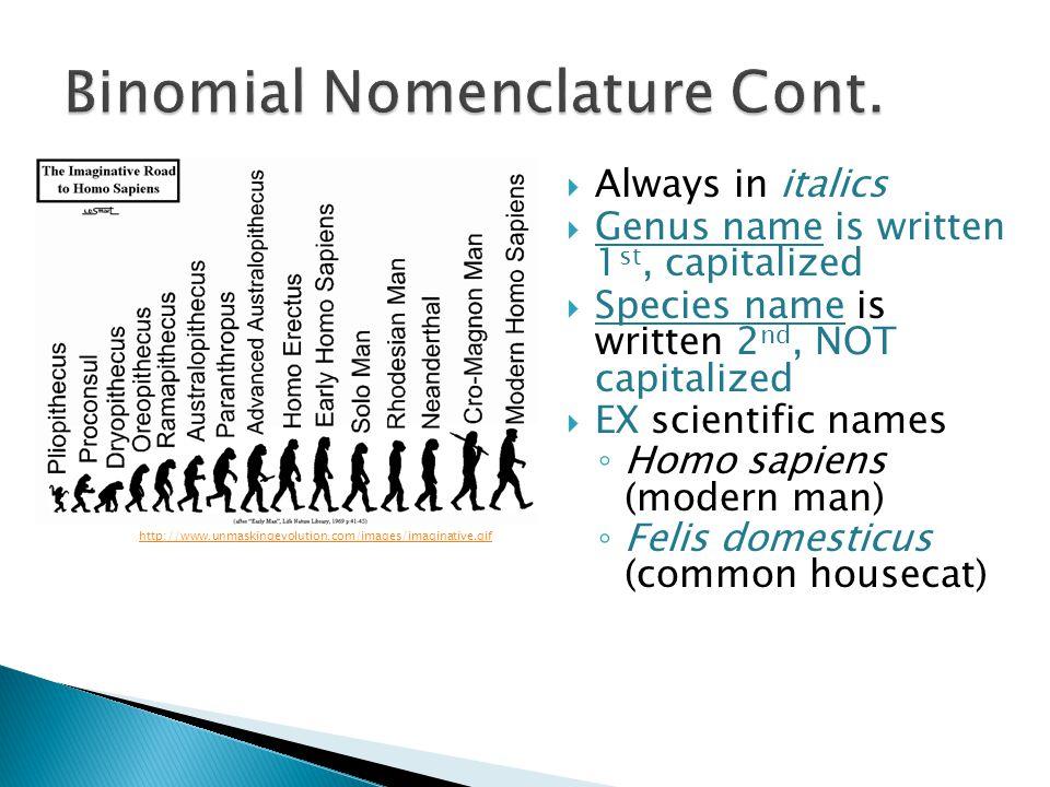 Always in italics Genus name is written 1 st, capitalized Species name is written 2 nd, NOT capitalized EX scientific names Homo sapiens (modern man)
