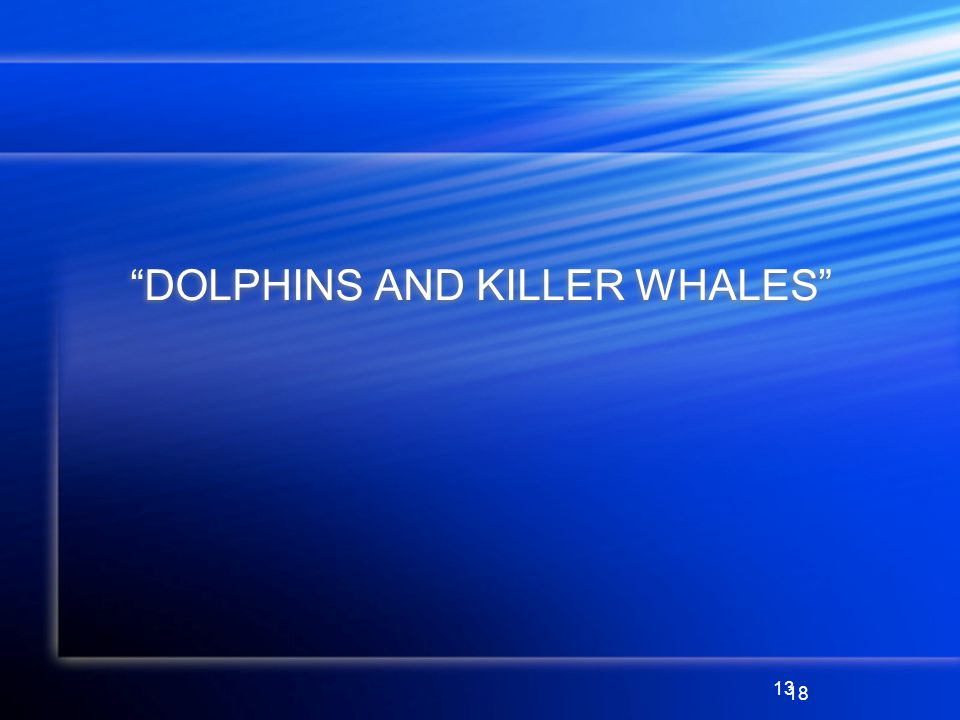 13 DOLPHINS AND KILLER WHALES 18