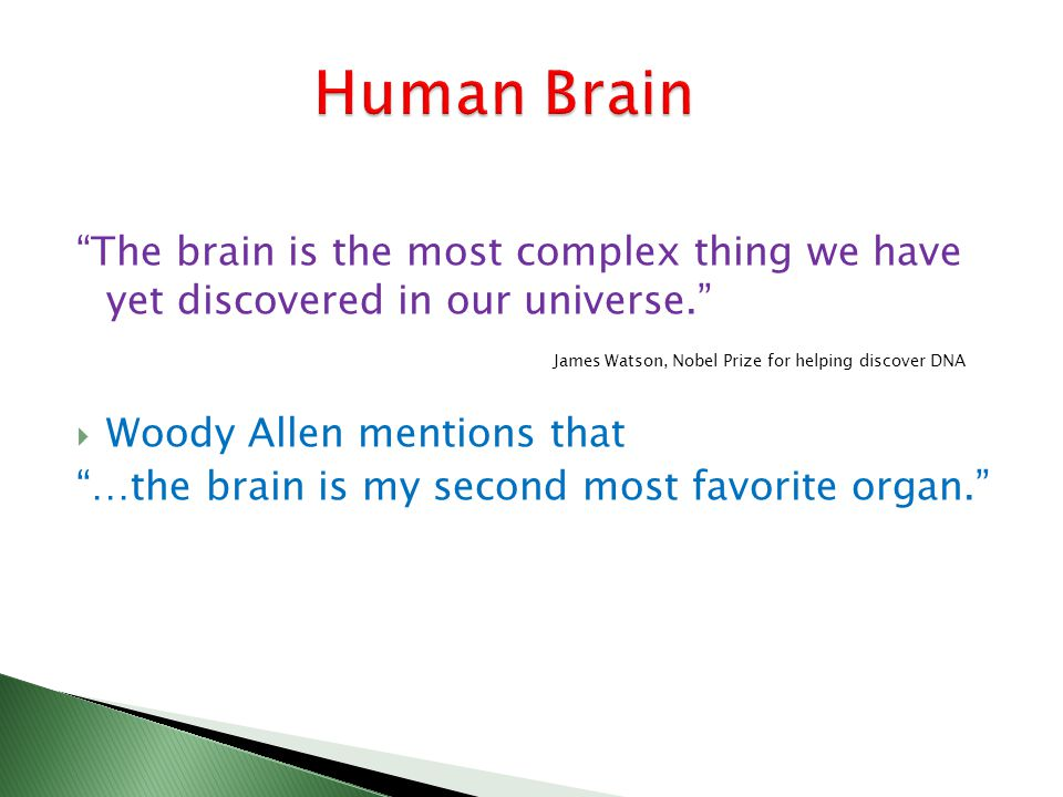 The brain is the most complex thing we have yet discovered in our universe.