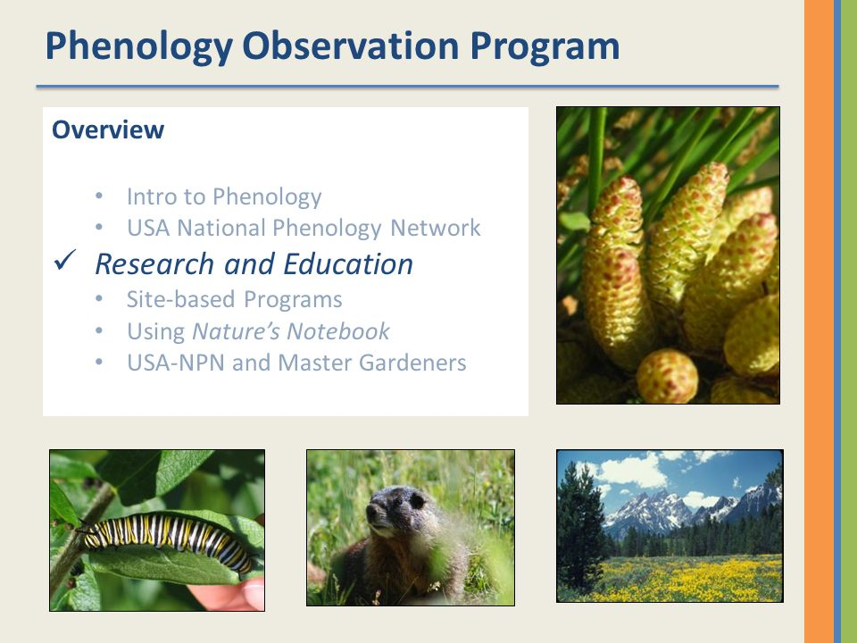Phenology Observation Program Overview Intro to Phenology USA National Phenology Network Research and Education Site-based Programs Using Natures Notebook USA-NPN and Master Gardeners