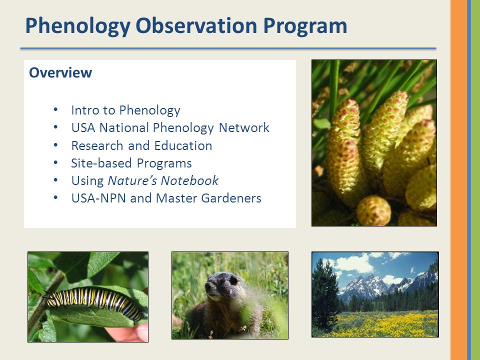 A NATIONAL NETWORK OF INTEGRATED PHENOLOGICAL OBSERVATIONS ACROSS SPACE AND TIME.
