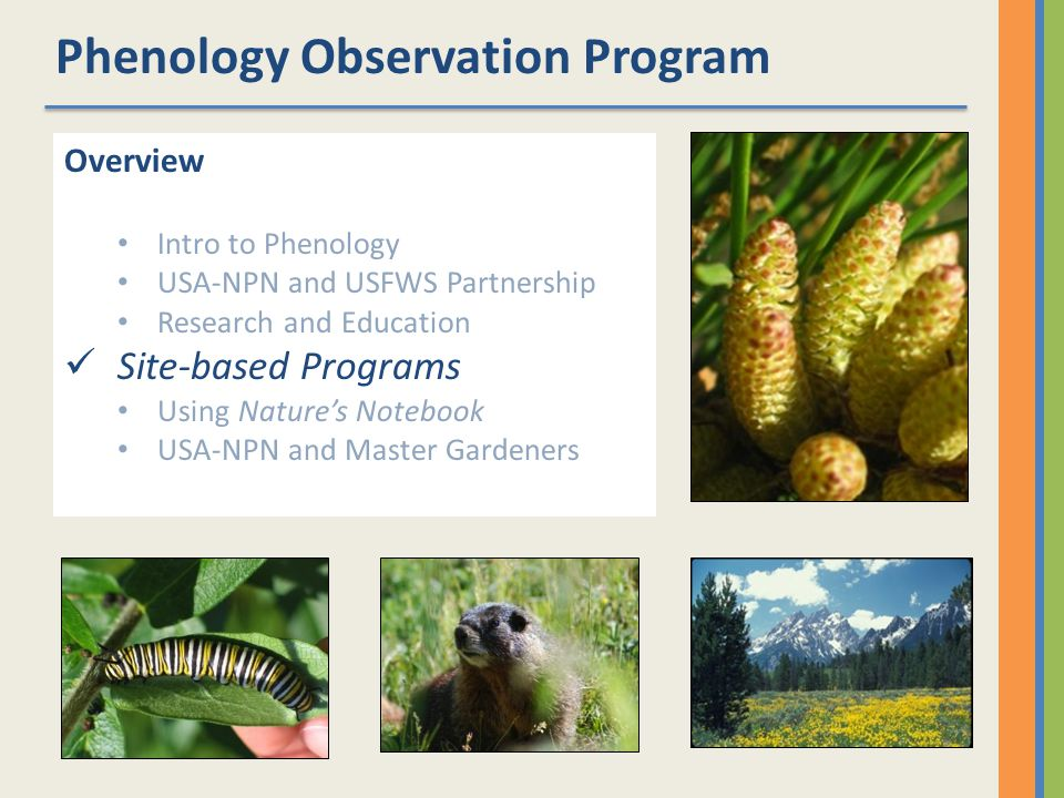Phenology Observation Program Overview Intro to Phenology USA-NPN and USFWS Partnership Research and Education Site-based Programs Using Natures Notebook USA-NPN and Master Gardeners