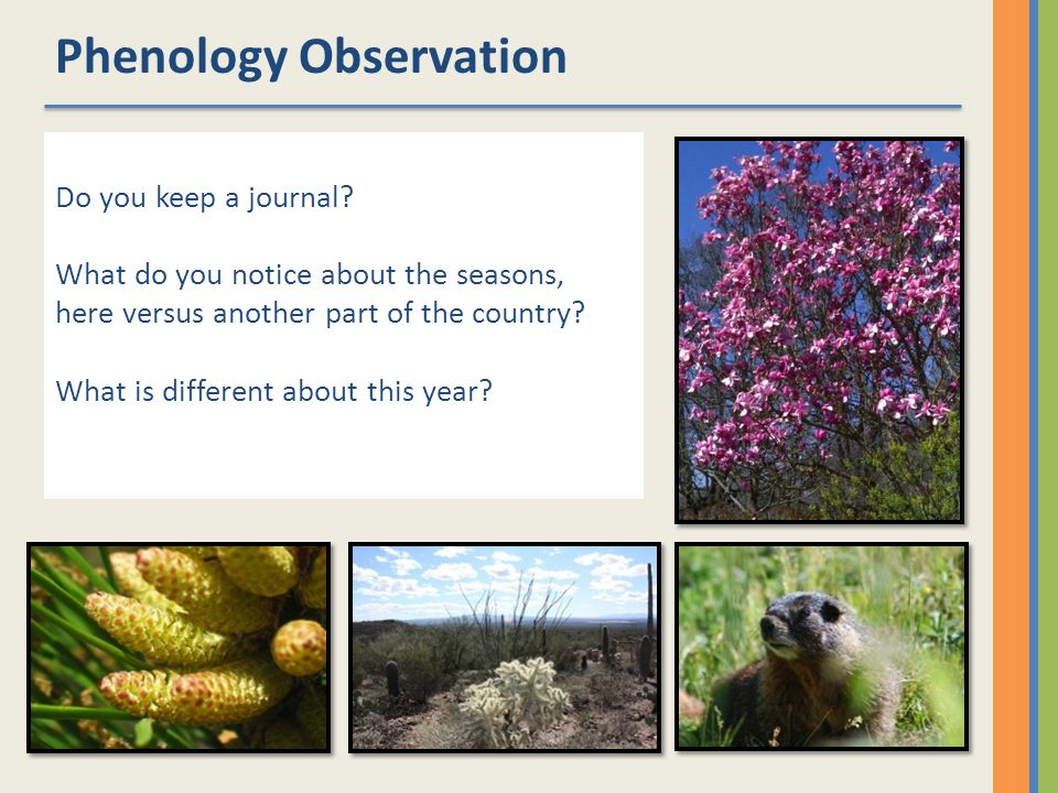Network Tools Standard methods for data collection Basic and applied research Decision-support tools Education and outreach Natures Notebook Legacy Datasets Citizen Science Project USA National Phenology Network
