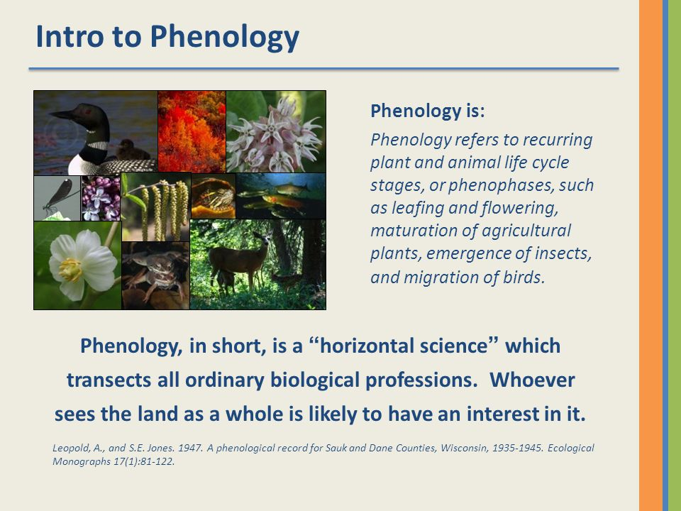Intro to Phenology What is phenology.