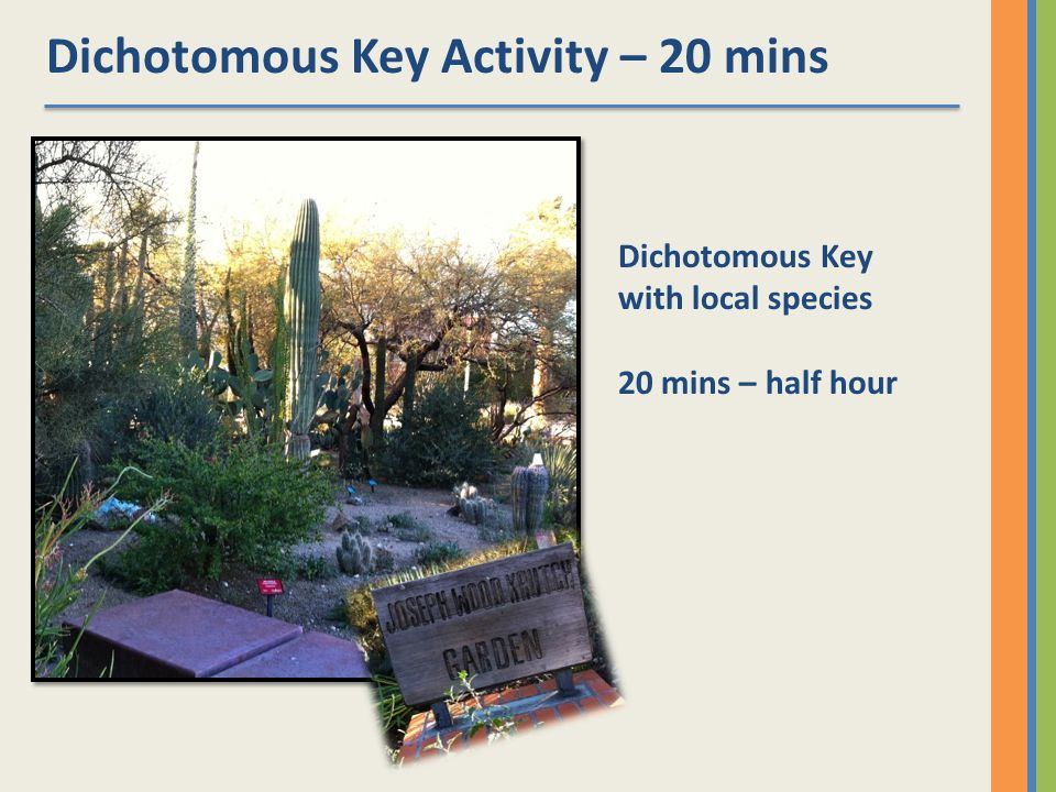 Dichotomous Key Activity – 20 mins Dichotomous Key with local species 20 mins – half hour