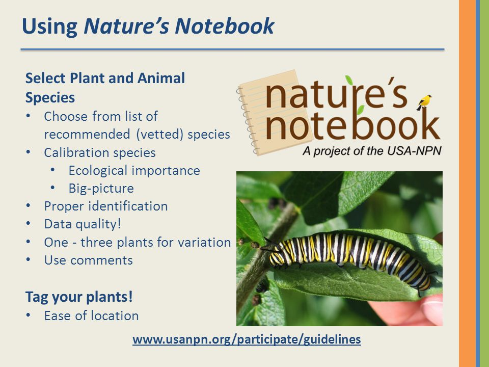 Using Natures Notebook   Select Plant and Animal Species Choose from list of recommended (vetted) species Calibration species Ecological importance Big-picture Proper identification Data quality.