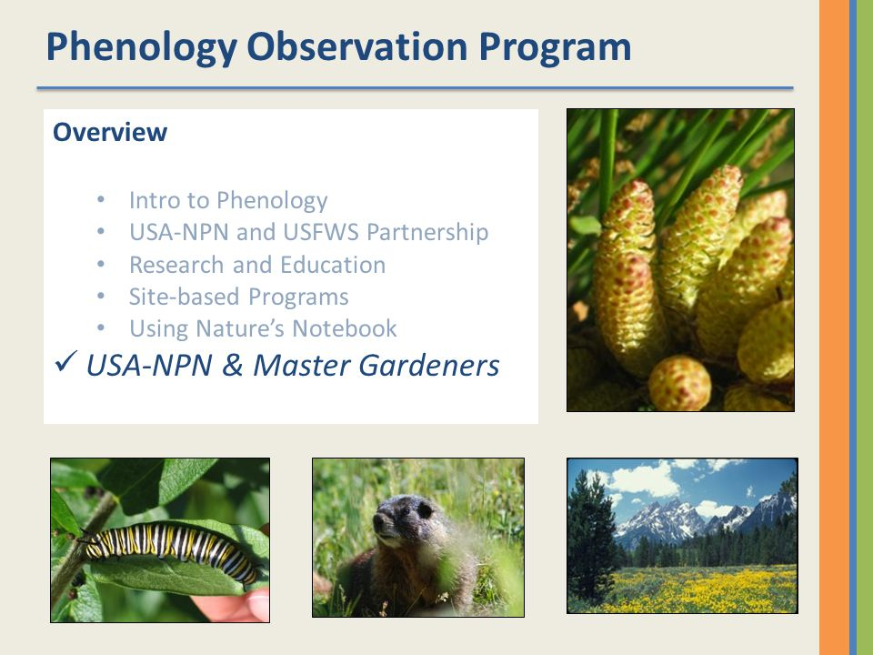 Phenology Observation Program Overview Intro to Phenology USA-NPN and USFWS Partnership Research and Education Site-based Programs Using Natures Notebook USA-NPN & Master Gardeners