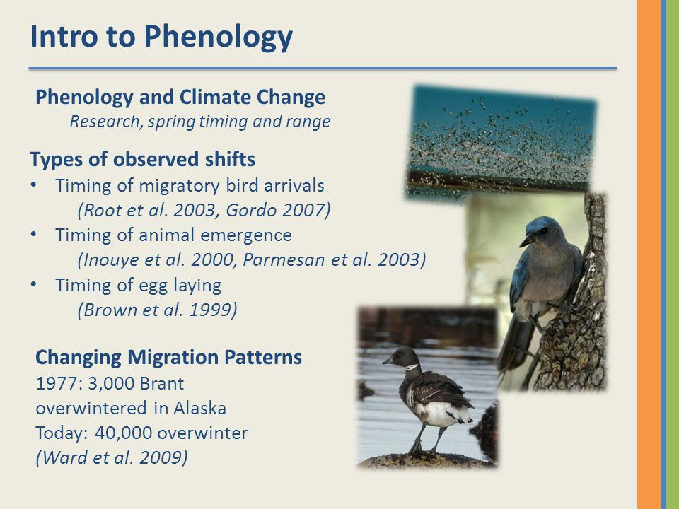 Intro to Phenology Phenology and Climate Change Research, spring timing and range Types of observed shifts Timing of migratory bird arrivals (Root et al.