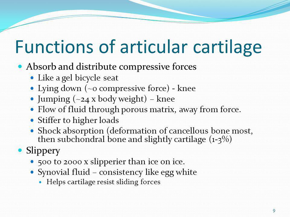 Functions of articular cartilage Absorb and distribute compressive forces Like a gel bicycle seat Lying down (~0 compressive force) - knee Jumping (~2