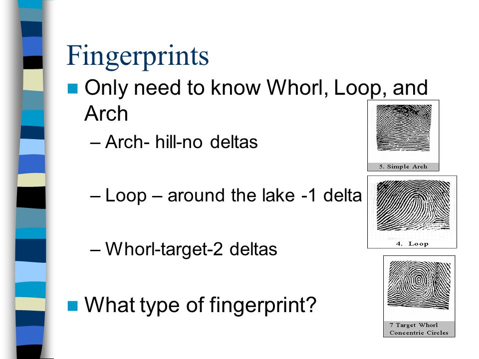 Fingerprints Only need to know Whorl, Loop, and Arch –Arch- hill-no deltas –Loop – around the lake -1 delta –Whorl-target-2 deltas What type of finger