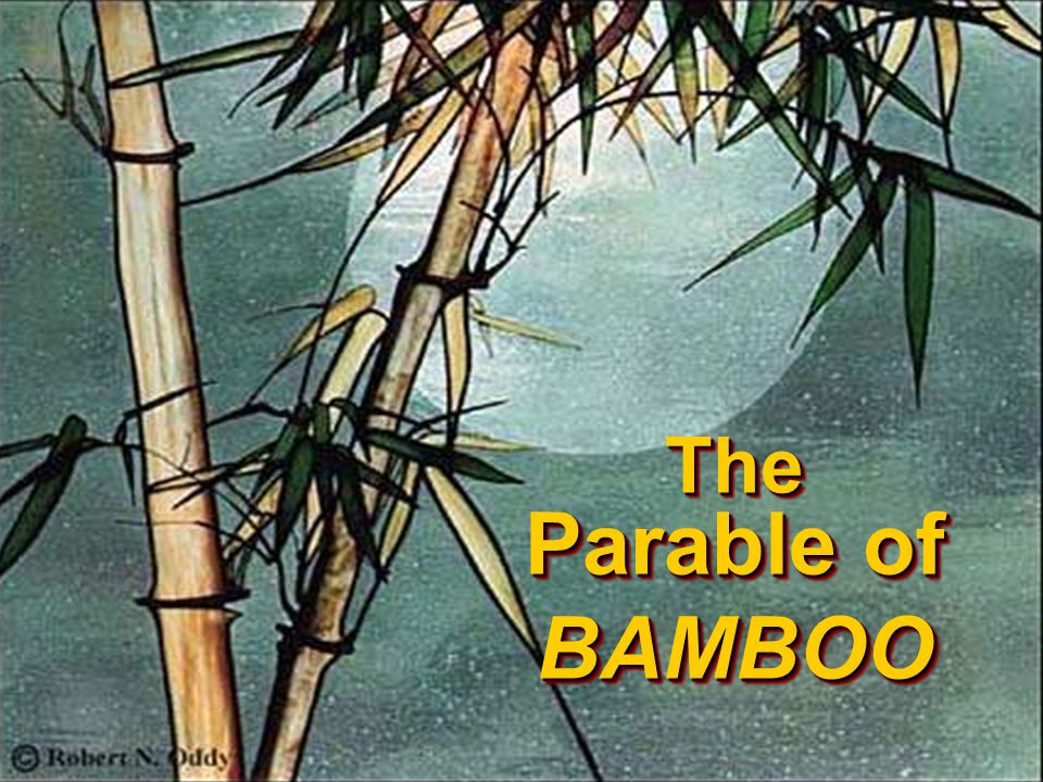 In that day was Bamboo, once so glorious in his stately beauty yet more glorious in his brokenness and humility.