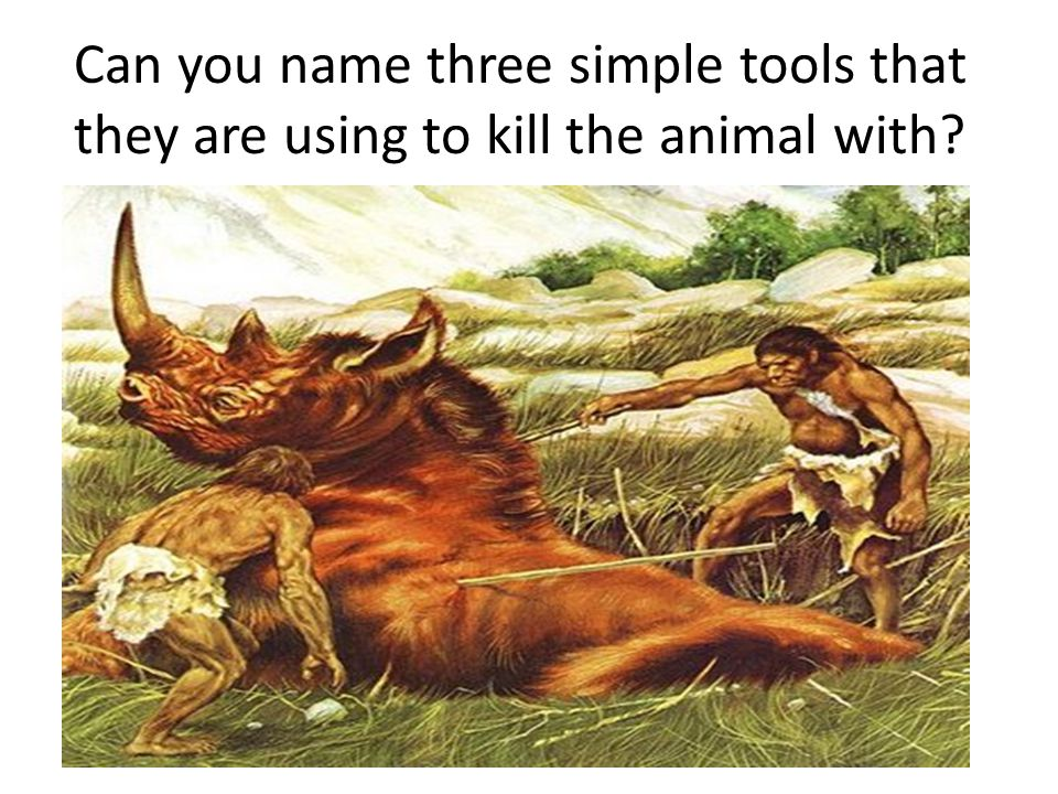 Can you name three simple tools that they are using to kill the animal with?