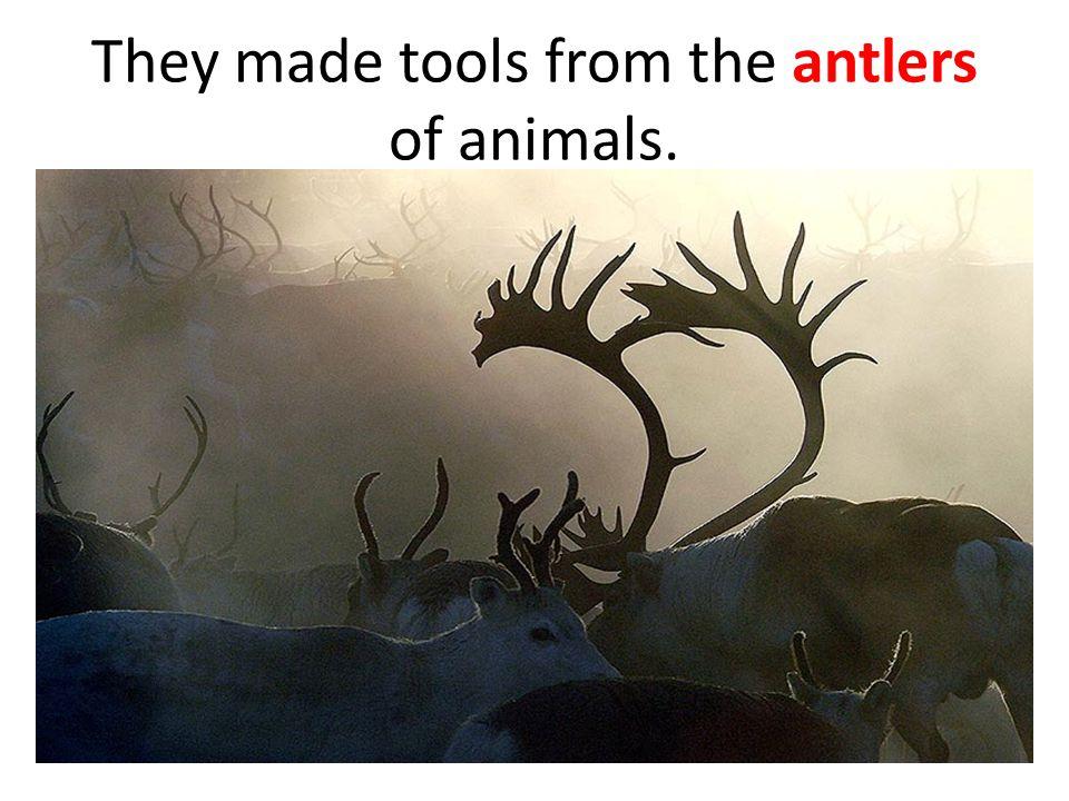 Cro-Magnon man used different tools.