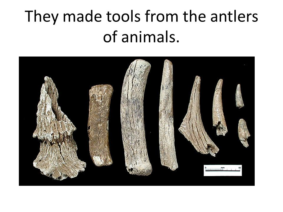 They even made needles out of bones.