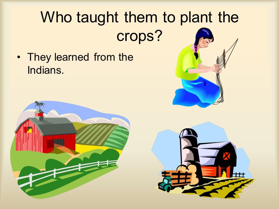 Who taught them to plant the crops? They learned from the Indians.