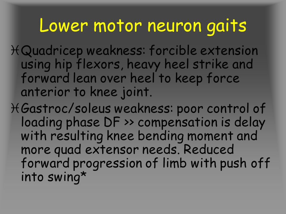 Lower motor neuron gaits iQuadricep weakness: forcible extension using hip flexors, heavy heel strike and forward lean over heel to keep force anterior to knee joint.