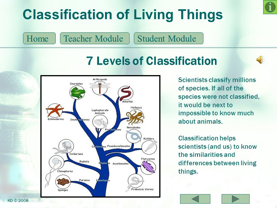 Classification of Living Things 7 Levels of Classification HomeTeacher ModuleStudent Module KD © 2008 Scientists classify millions of species. If all