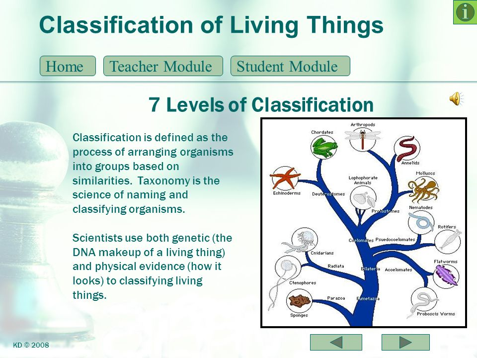 Classification of Living Things 7 Levels of Classification HomeTeacher ModuleStudent Module KD © 2008 Classification is defined as the process of arra