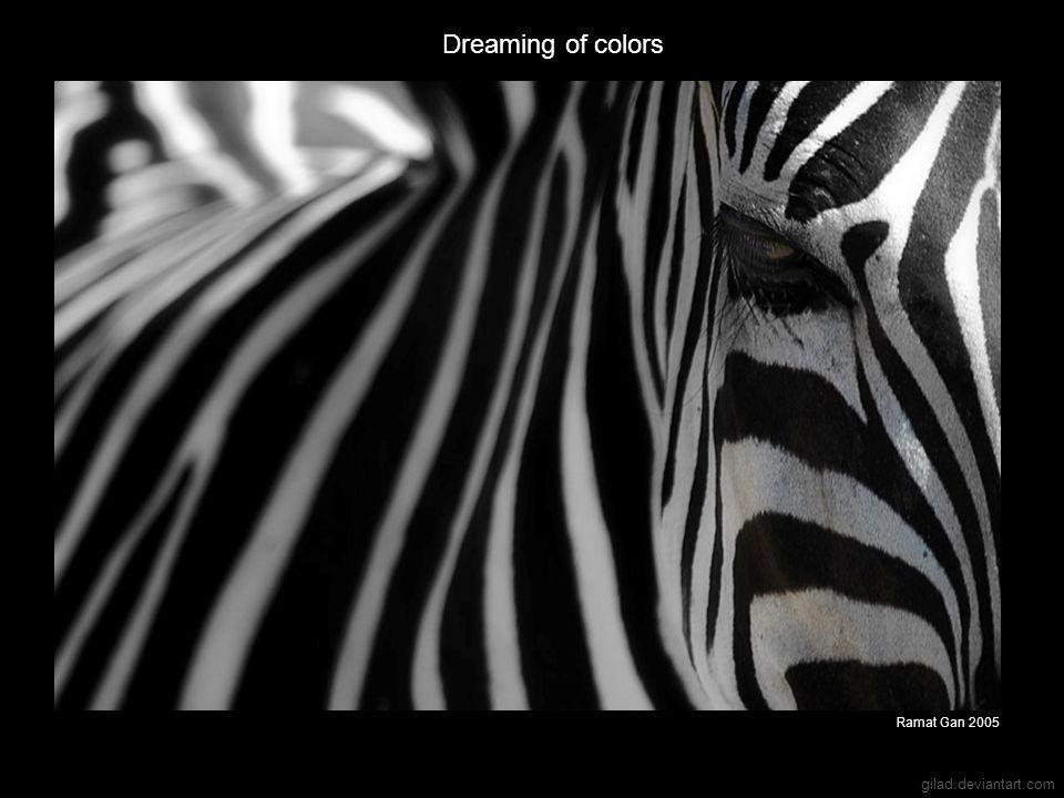 gilad.deviantart.com Dreaming of colors Ramat Gan 2005