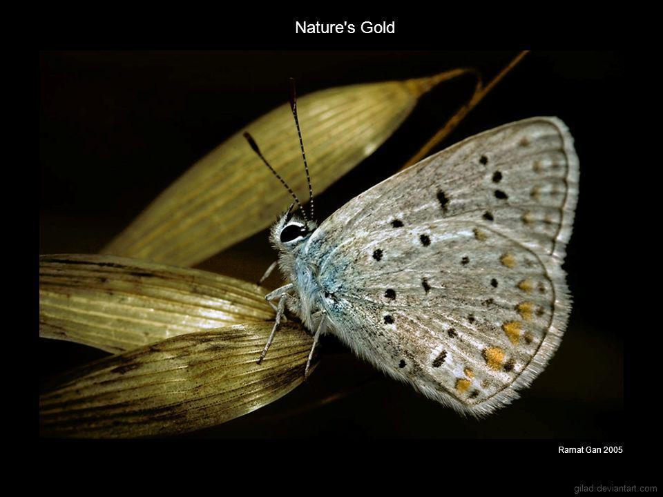 gilad.deviantart.com Nature s Gold Ramat Gan 2005