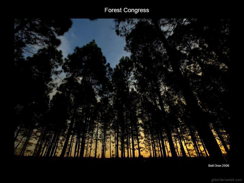 gilad.deviantart.com Forest Congress Beit Oren 2006