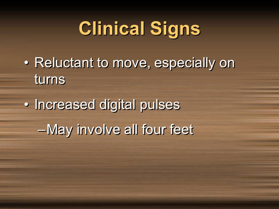 Clinical Signs Reluctant to move, especially on turns Increased digital pulses –May involve all four feet Reluctant to move, especially on turns Incre