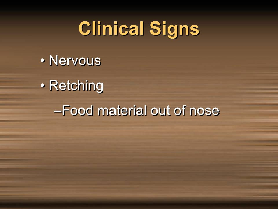 Clinical Signs Nervous Retching –Food material out of nose Nervous Retching –Food material out of nose