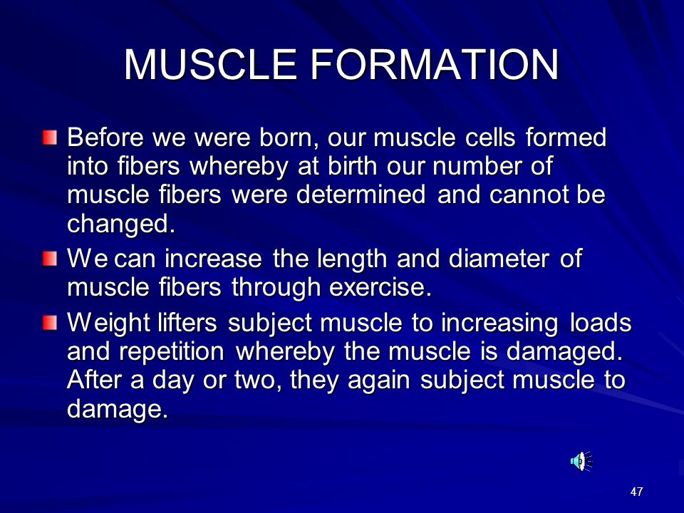 47 MUSCLE FORMATION Before we were born, our muscle cells formed into fibers whereby at birth our number of muscle fibers were determined and cannot be changed.