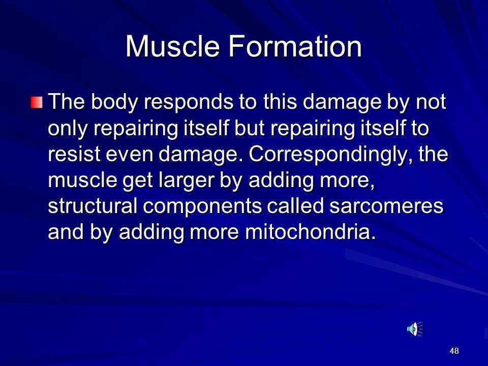 48 Muscle Formation The body responds to this damage by not only repairing itself but repairing itself to resist even damage.
