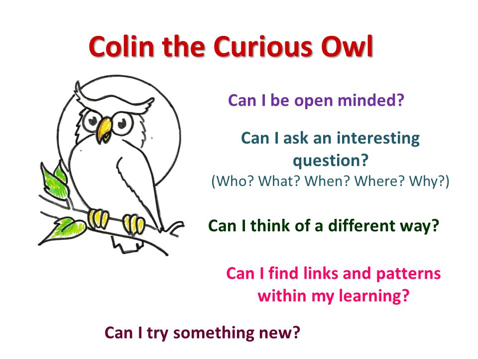 Colin the Curious Owl Can I be open minded. Can I try something new.