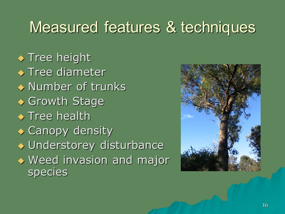 16 Measured features & techniques Tree height Tree height Tree diameter Tree diameter Number of trunks Number of trunks Growth Stage Growth Stage Tree health Tree health Canopy density Canopy density Understorey disturbance Understorey disturbance Weed invasion and major species Weed invasion and major species