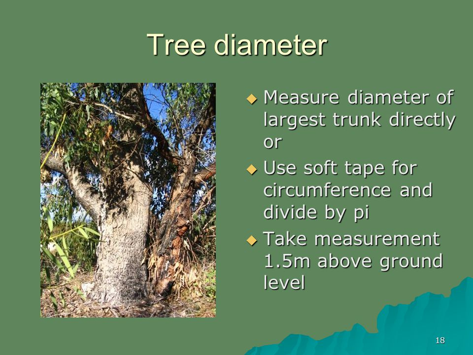18 Tree diameter Measure diameter of largest trunk directly or Measure diameter of largest trunk directly or Use soft tape for circumference and divide by pi Use soft tape for circumference and divide by pi Take measurement 1.5m above ground level Take measurement 1.5m above ground level