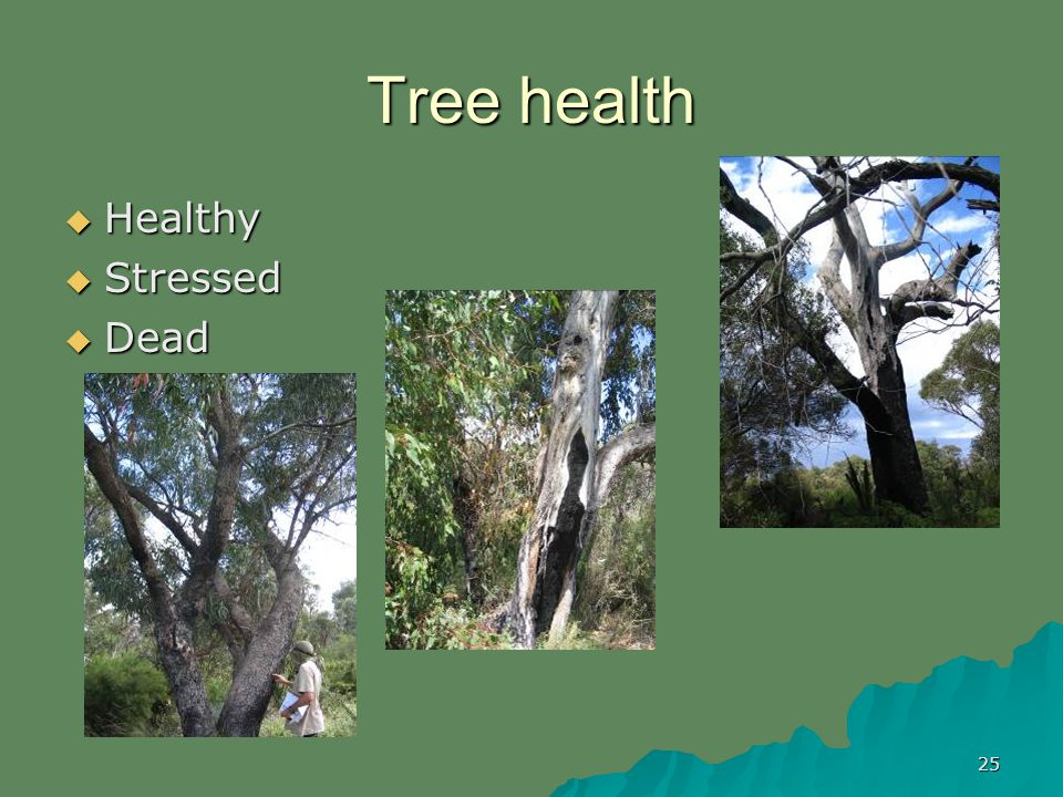 25 Tree health Healthy Healthy Stressed Stressed Dead Dead