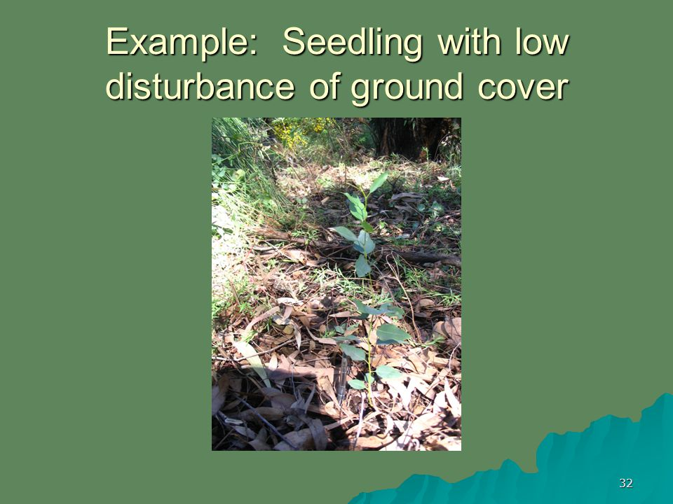 32 Example: Seedling with low disturbance of ground cover
