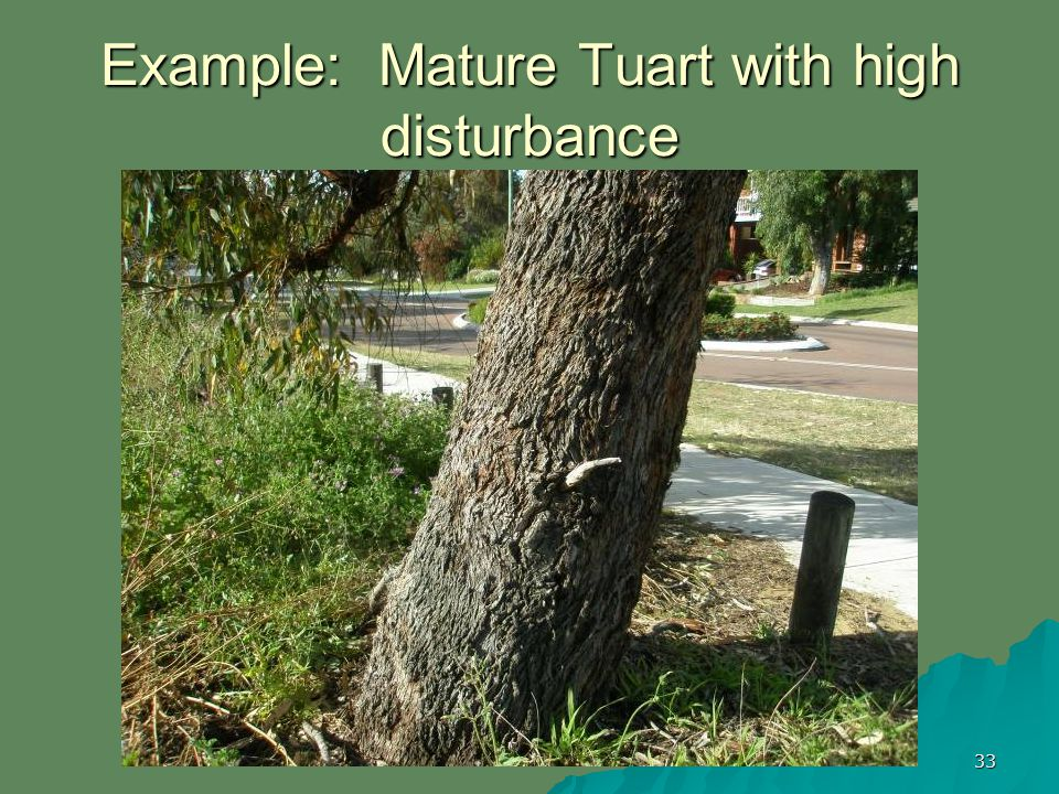 33 Example: Mature Tuart with high disturbance