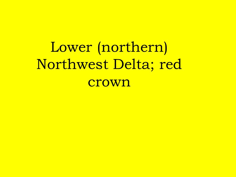 Lower (northern) Northwest Delta; red crown