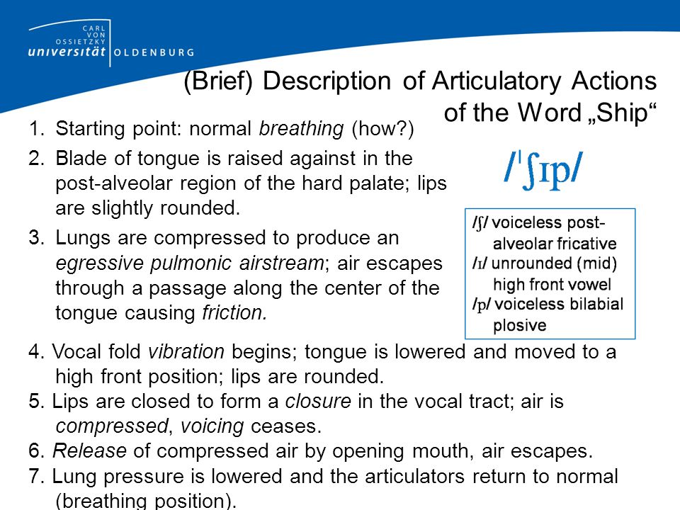 (Brief) Description of Articulatory Actions of the Word Ship 1.Starting point: normal breathing (how?) 2.Blade of tongue is raised against in the post