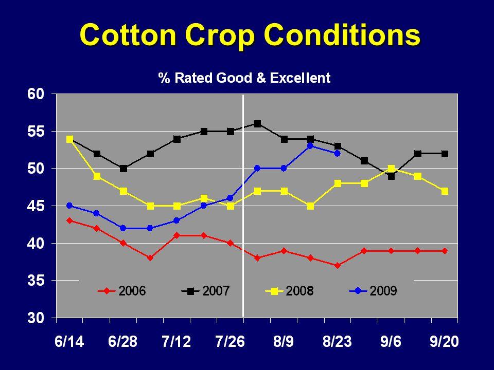 Cotton Crop Conditions