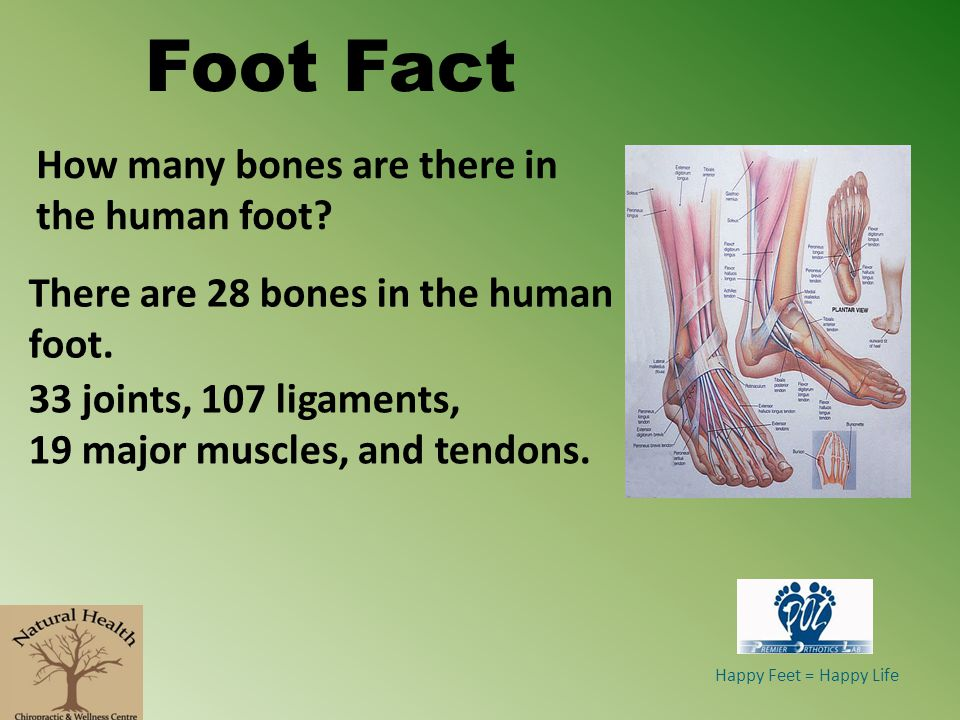 Happy Feet = Happy Life Foot Fact How many bones are there in the human foot.
