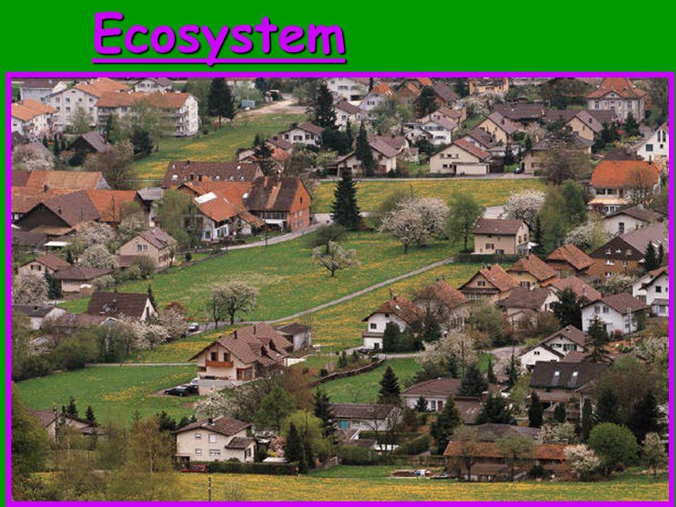 10Ecosystem